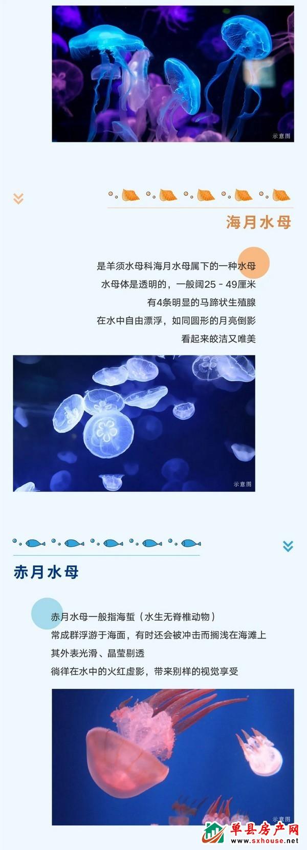 2020绿城蘭园海洋节 | 看点大揭秘—梦幻水母艺术展