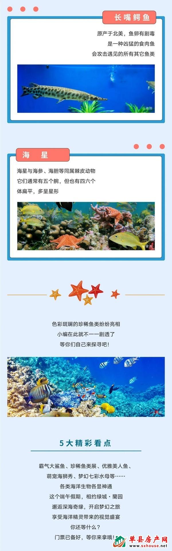 2020绿城蘭园海洋节 | 海洋霸主—大鲨鱼空降单县 神秘海鱼组团出没